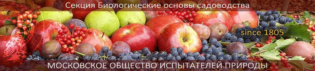БОС МОИП